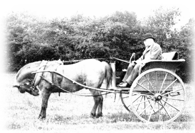 Herbert Parsons in his old age in his pony carriage