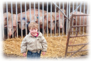 Jamie with the pigs at Sescut Farm, 1989