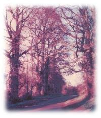 Image of Under Elms
